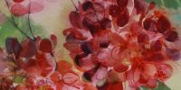 Floral III - Geraniums
